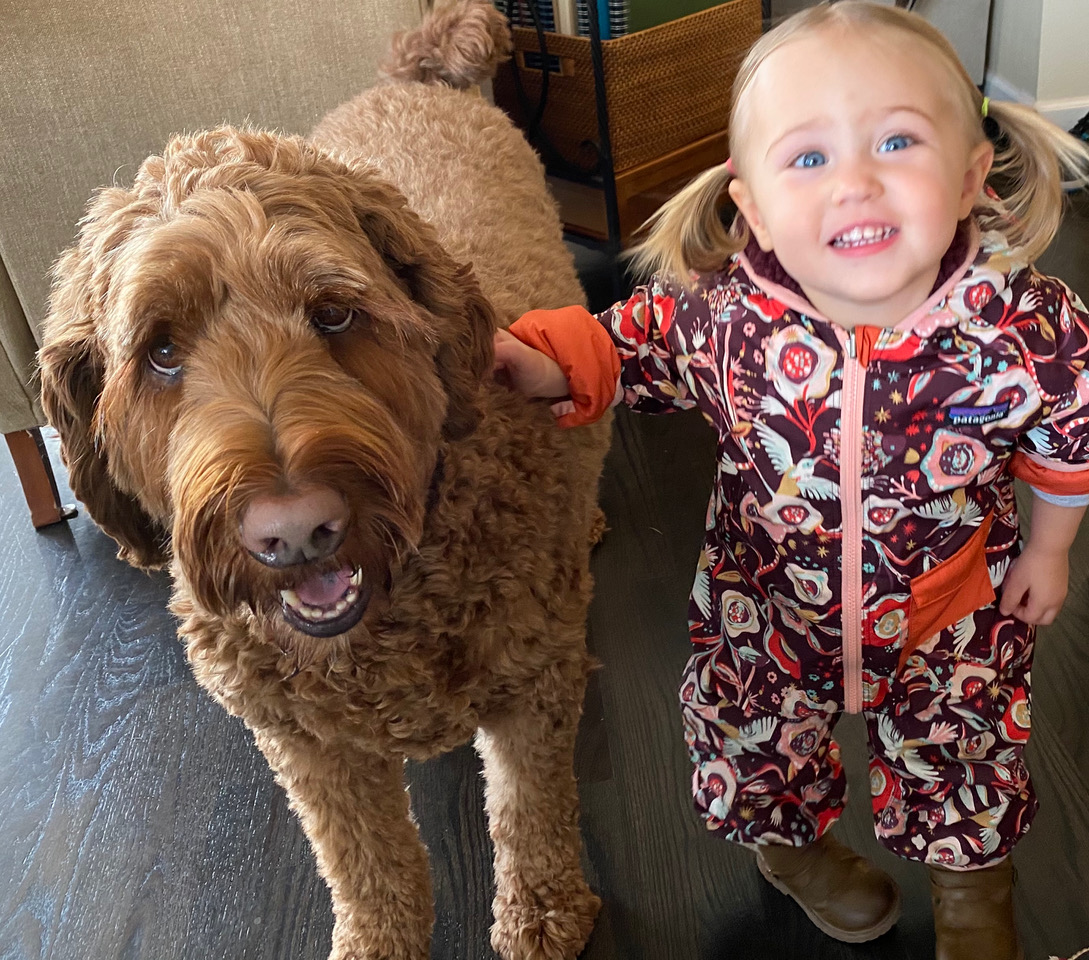 Shedless In Seattle Labradoodles